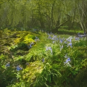 bluebell-wood-2