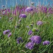 wild-flower-bank