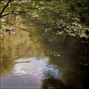 13 Summer stream L