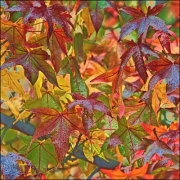 3 Autumn leaves L