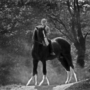 english-shire-horse