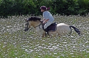 flower-meadow-ride