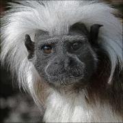 punky-monkey