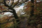 Bala Autumn