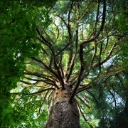 tree-perspective